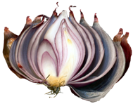 Image of an onion pealed back to expose the core